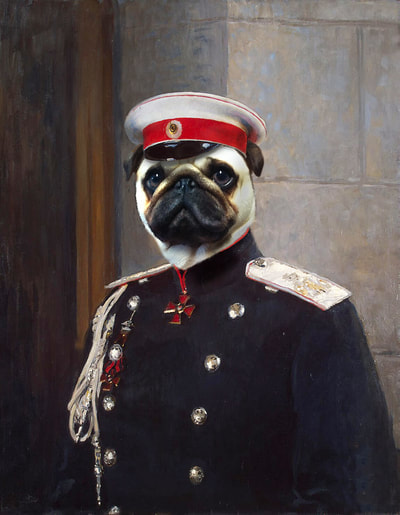 Pug Dog Portrait